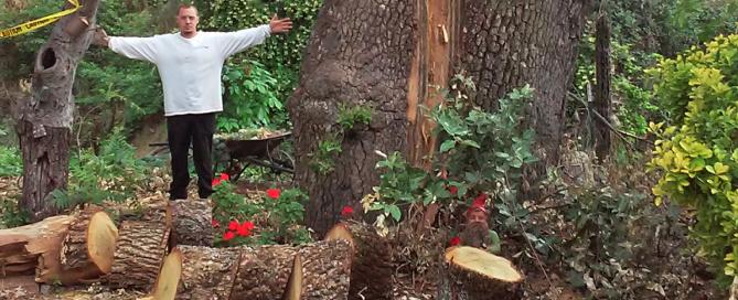 Oak Tree Trimming - El Dorado Hills