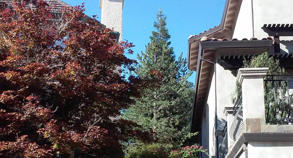Pine Tree Removal Sacramento