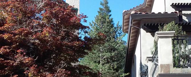 Pine Tree Removal - El Dorado Hills