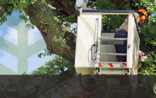 Tree Removal Arborist El Dorado Hills - Feature