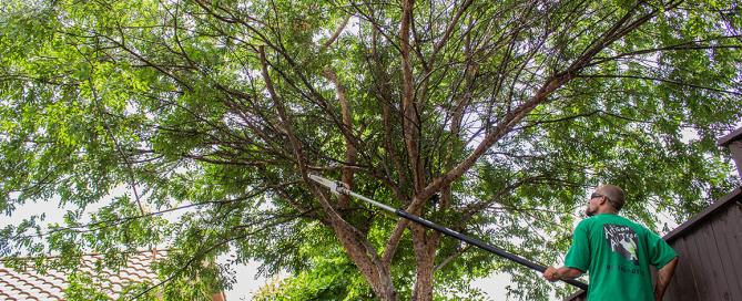 Tree Trimming El Dorado Hills - Cost & Pricing