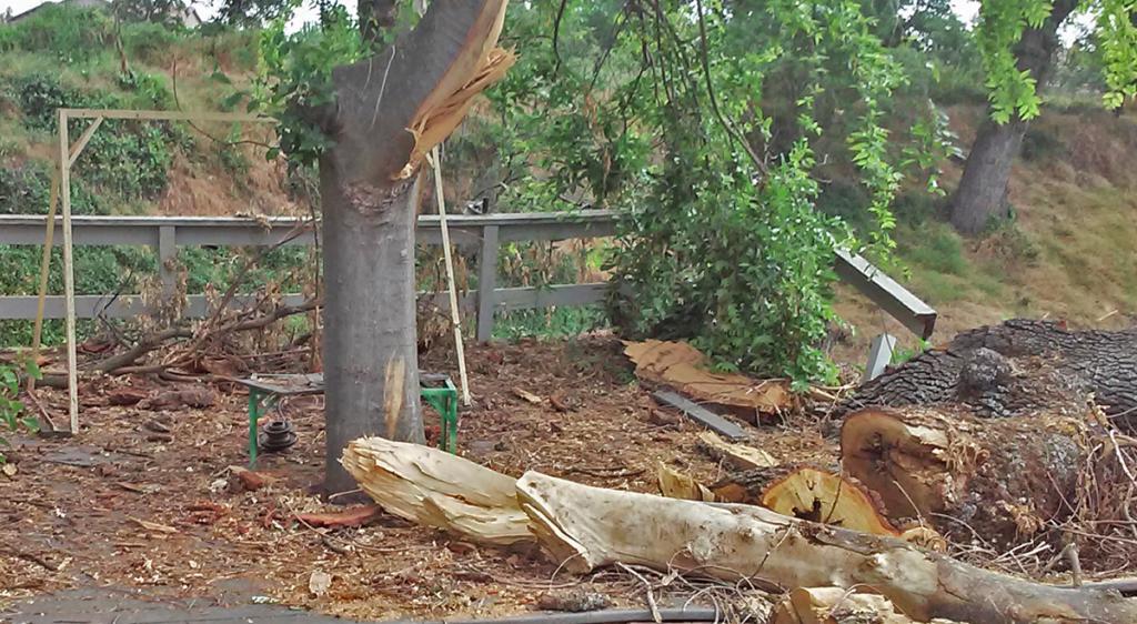 Fallen Tree Removal Sacramento