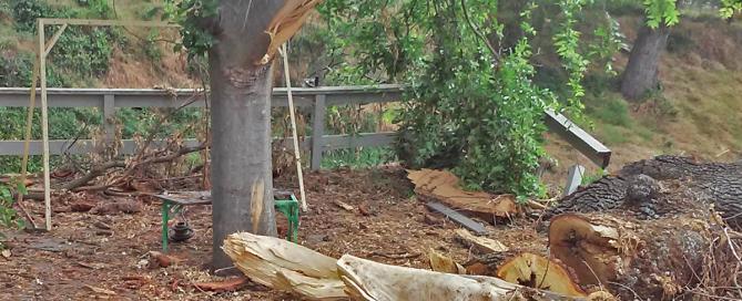 Fallen Tree Removal El Dorado Hills