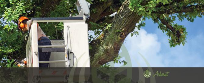Tree Removal Arborist El Dorado Hills