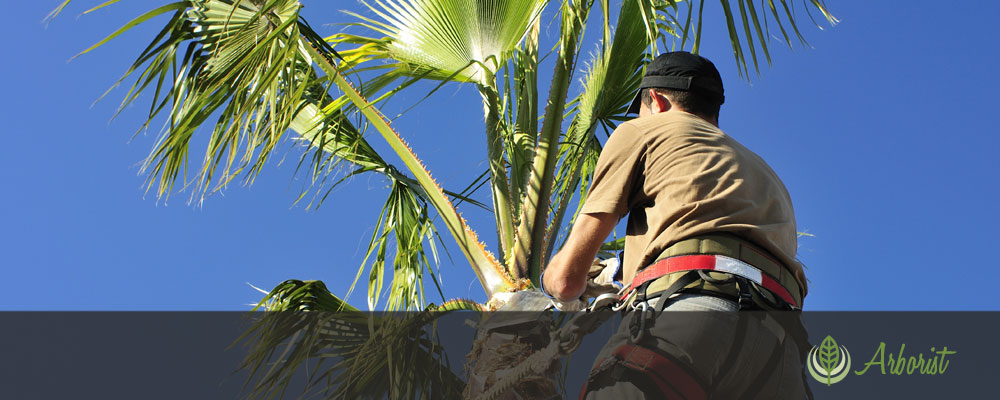Palm Tree Removal - Tree Removal Arborist of Sacramento