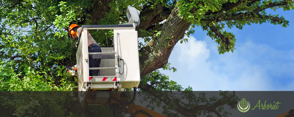Tree Trimming and Removal - Tree Removal Arborist of Sacramento