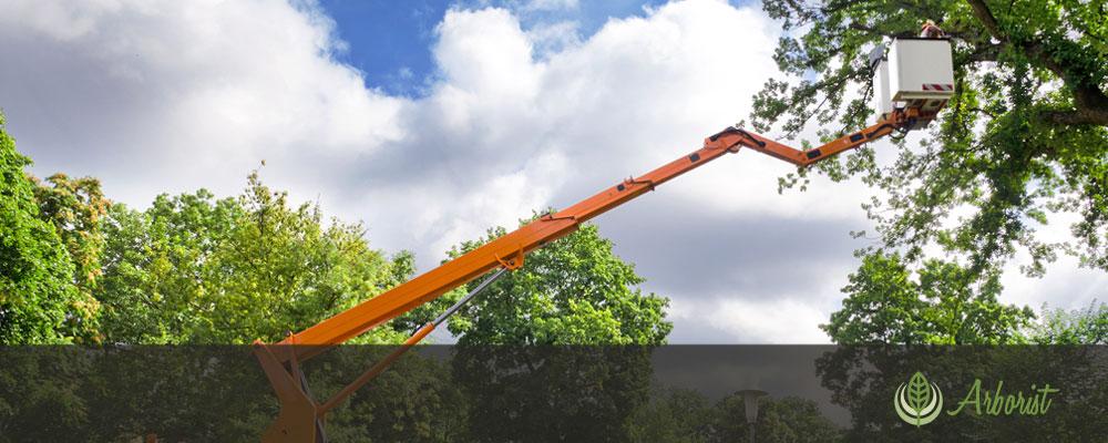 Tree Removal Arborist Sacramento