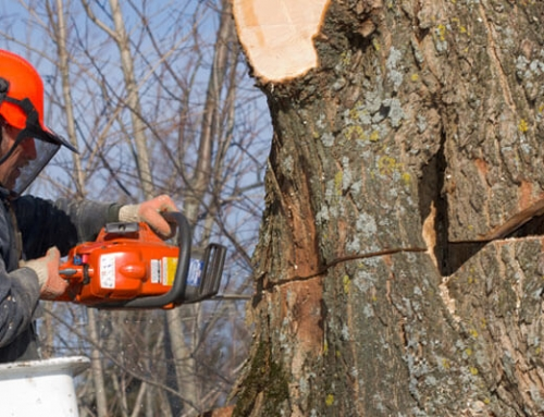 DIY Tree Care: How To Grind a Tree Stump