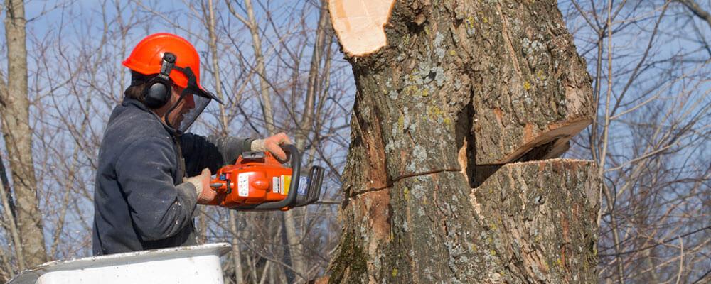 Tree Removal Arborist of Sacramento