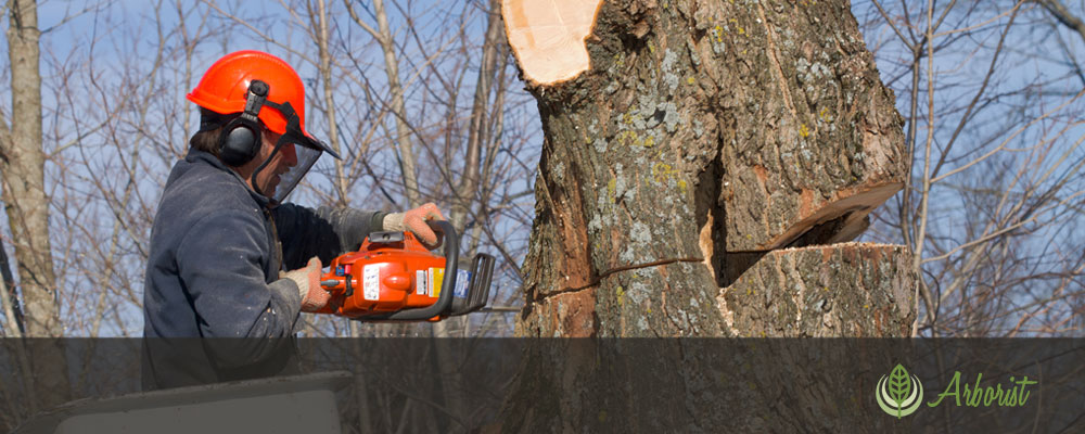 Tree Removal Arborist of Sacramento