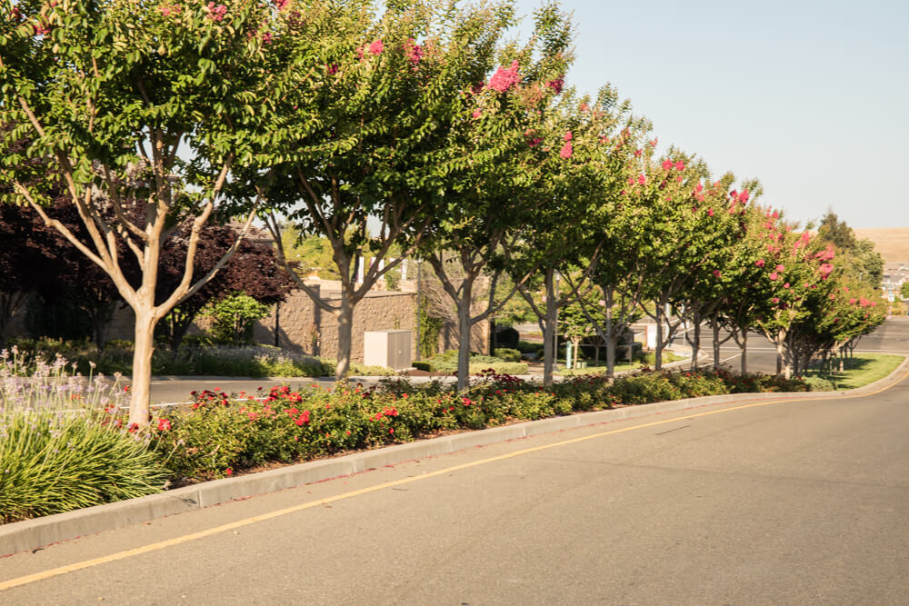 Highway Tree Care - El Dorado Hills