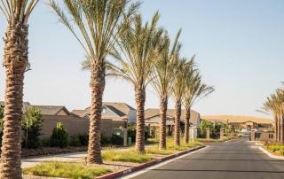Palm Tree Trimming Service - Tree Removal Arborist in El Dorado Hills