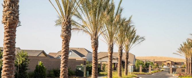 Palm Tree Trimming Service - Tree Removal Arborist in El Dorado Hills