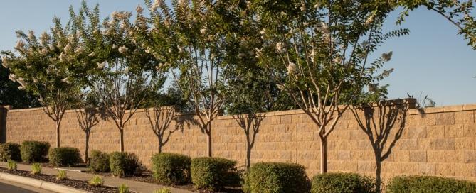 Tree Trimming and Thinning - Tree Removal Arborist in El Dorado Hills