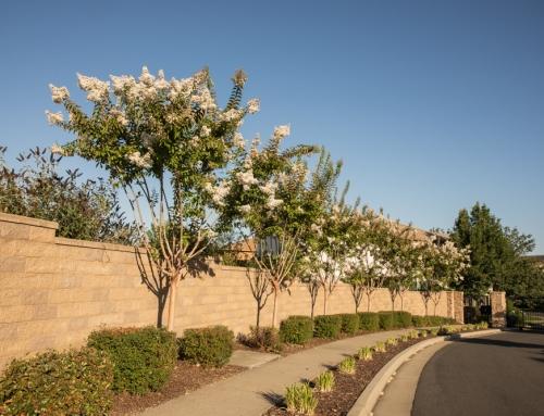 Church Tree Trimming & Thinning Services El Dorado Hills