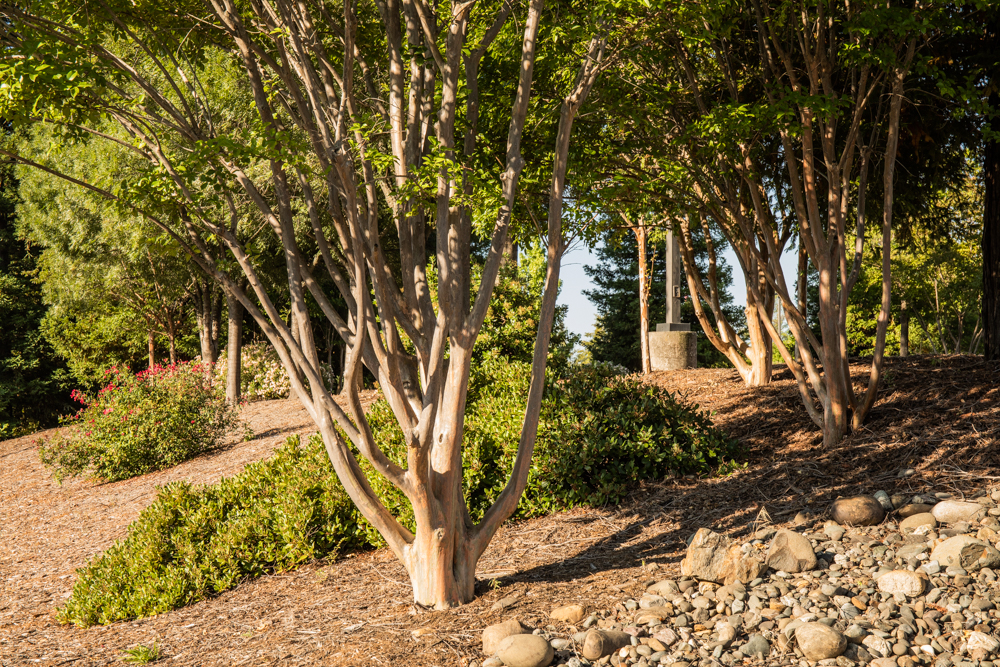 How to care for your trees during summer droughts in the El Dorado Hills area